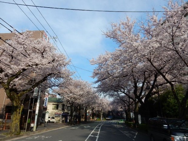 桜2016-4-6 (48)