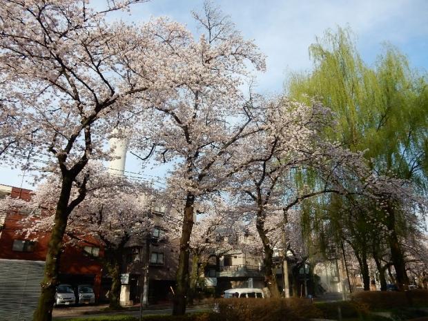 桜2016-4-6 (53)