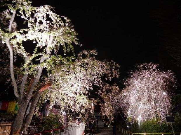 南蔵院4-8夜 (1)