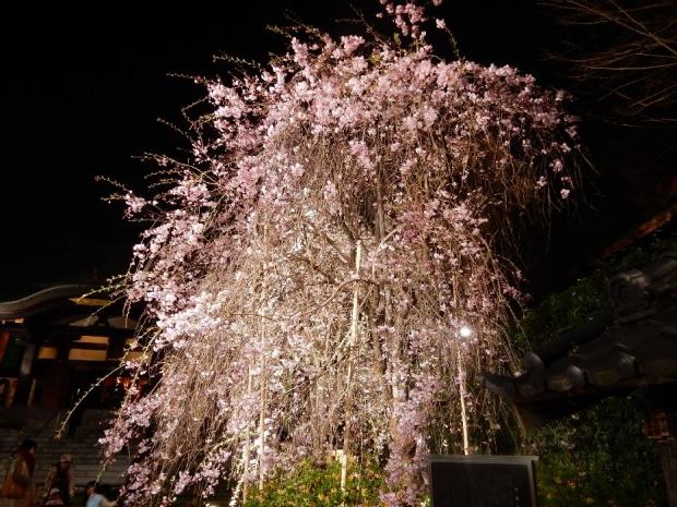 南蔵院2016夜 (4)