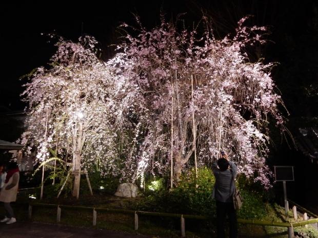 南蔵院2016夜 (7)