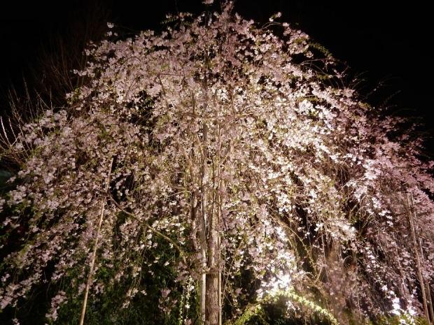南蔵院2016夜 (10)