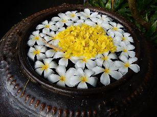 アナンタラ浮き花 (1)
