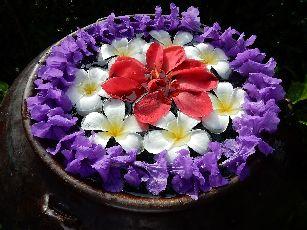 アナンタラ浮き花 (2)