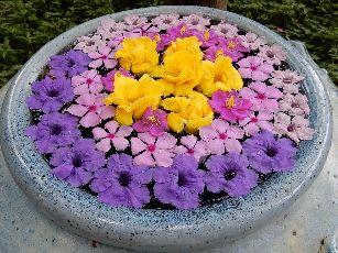 アナンタラ浮き花 (3)