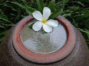 アナンタラ浮き花 (5)