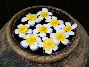 アナンタラ浮き花 (6)