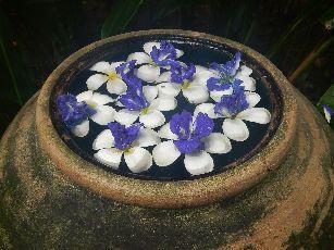 アナンタラ浮き花 (9)