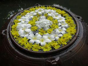 アナンタラ浮き花 (11)