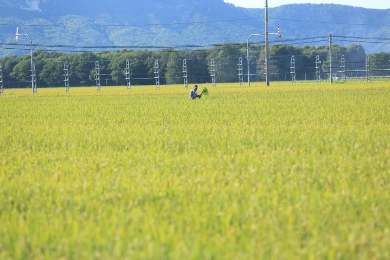YOSI6181.jpg