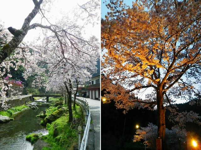 2016 4 9 養沢 (1)