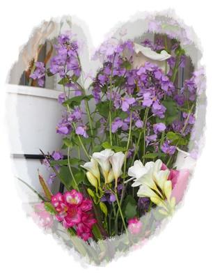 北堀さん玄関の花3