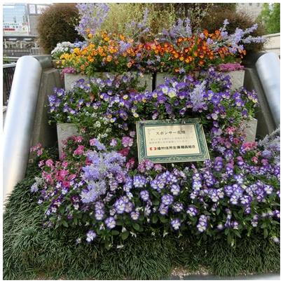 神戸の花1