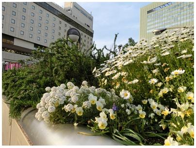 神戸の花2