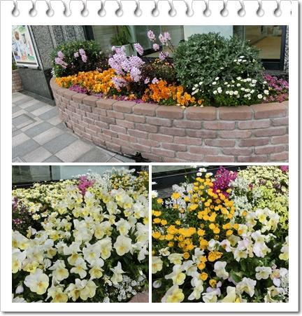 神戸の花4