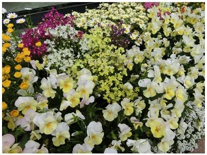 神戸の花5