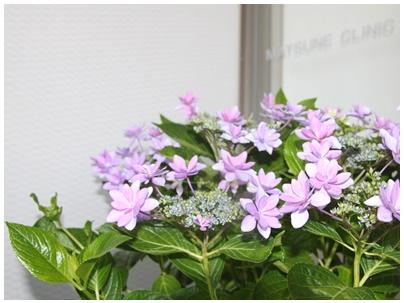 ダンスパーティ(紫)4