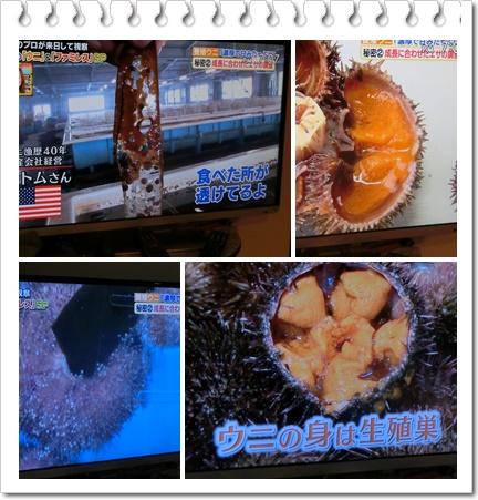 ウニのテレビ