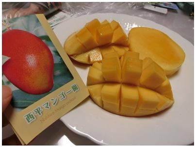 べっぴんマンゴー4