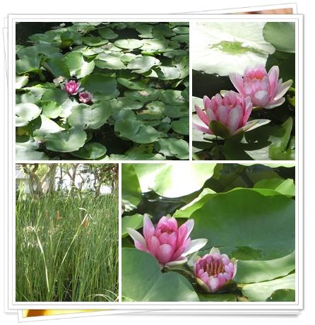 神戸公園の花