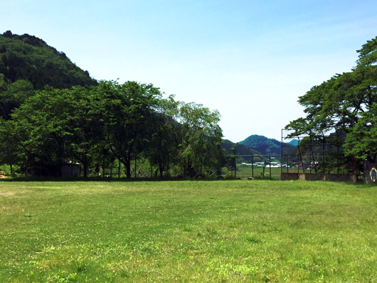 校庭が草原