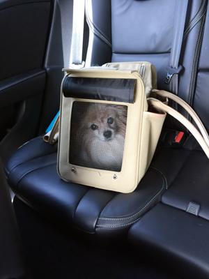 安全ドライブ