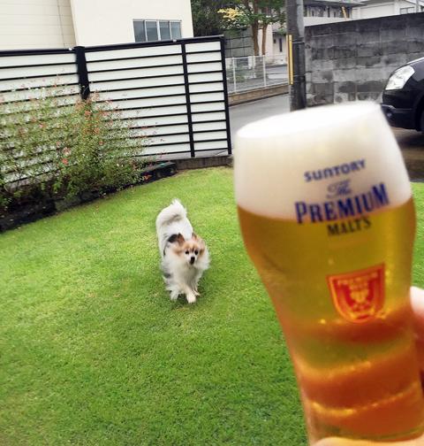 ビールの向こうにPattyちゃん