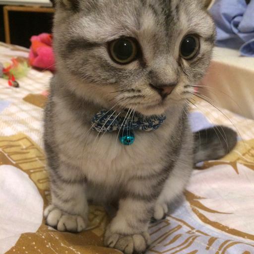 猫の首輪専門店mauha(千葉県S様)お写真