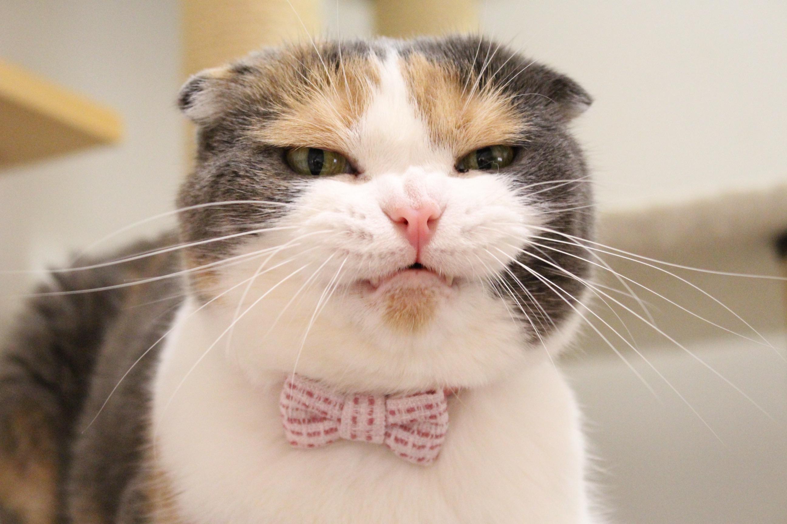猫の首輪専門店mauha(マッシュ)1