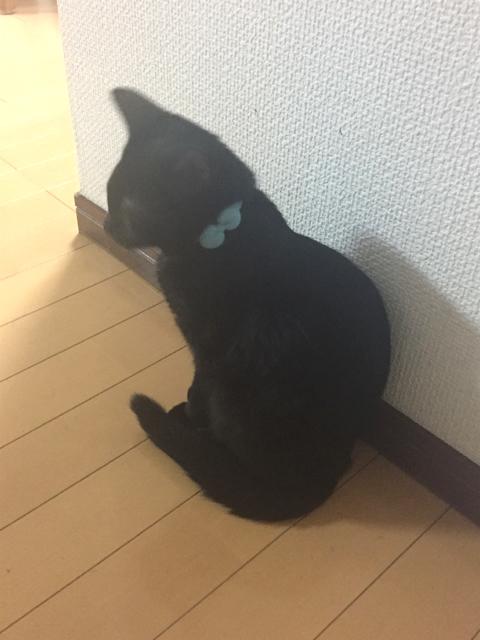 猫の首輪専門店mauha(神奈川県S様)お写真2