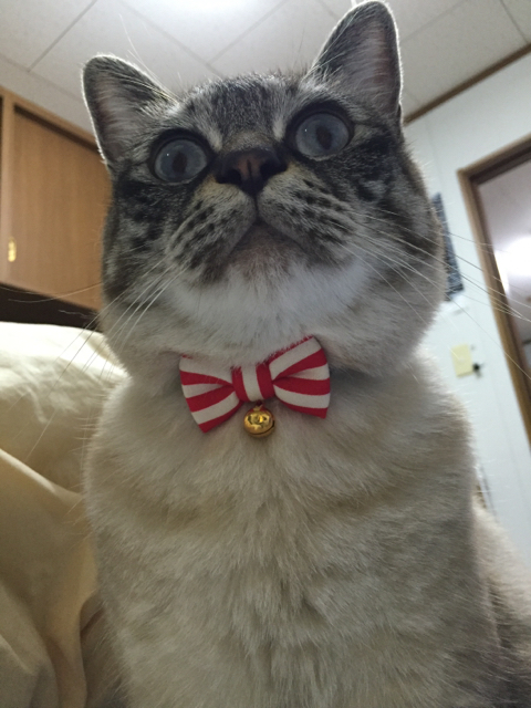 猫の首輪専門店mauha(青森県U様)お客様写真