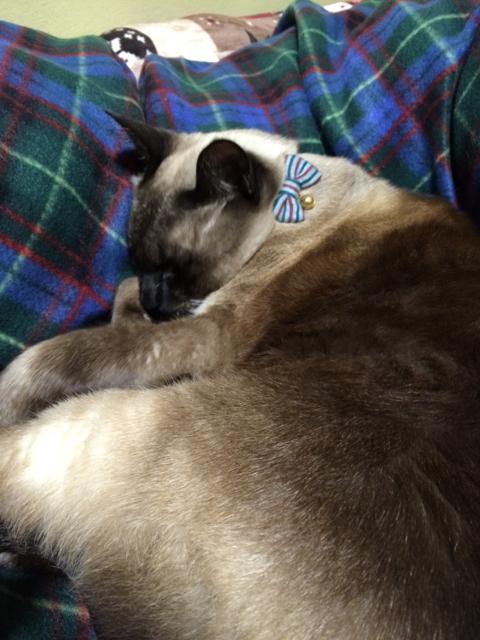 猫の首輪専門店mauha(宮崎県U様)