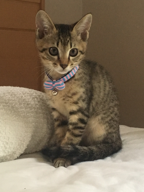猫の首輪専門店mauha(宮城県H様)お写真1