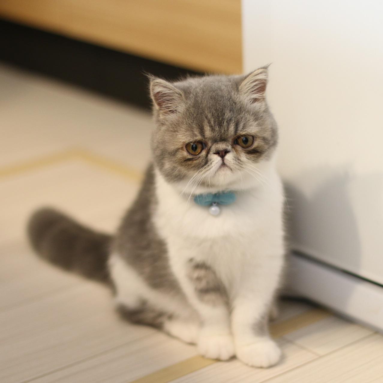 猫の首輪専門店mauha(高田様)お写真