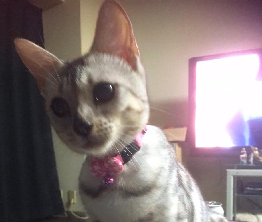 猫の首輪専門店mauha(寺田様)お写真1