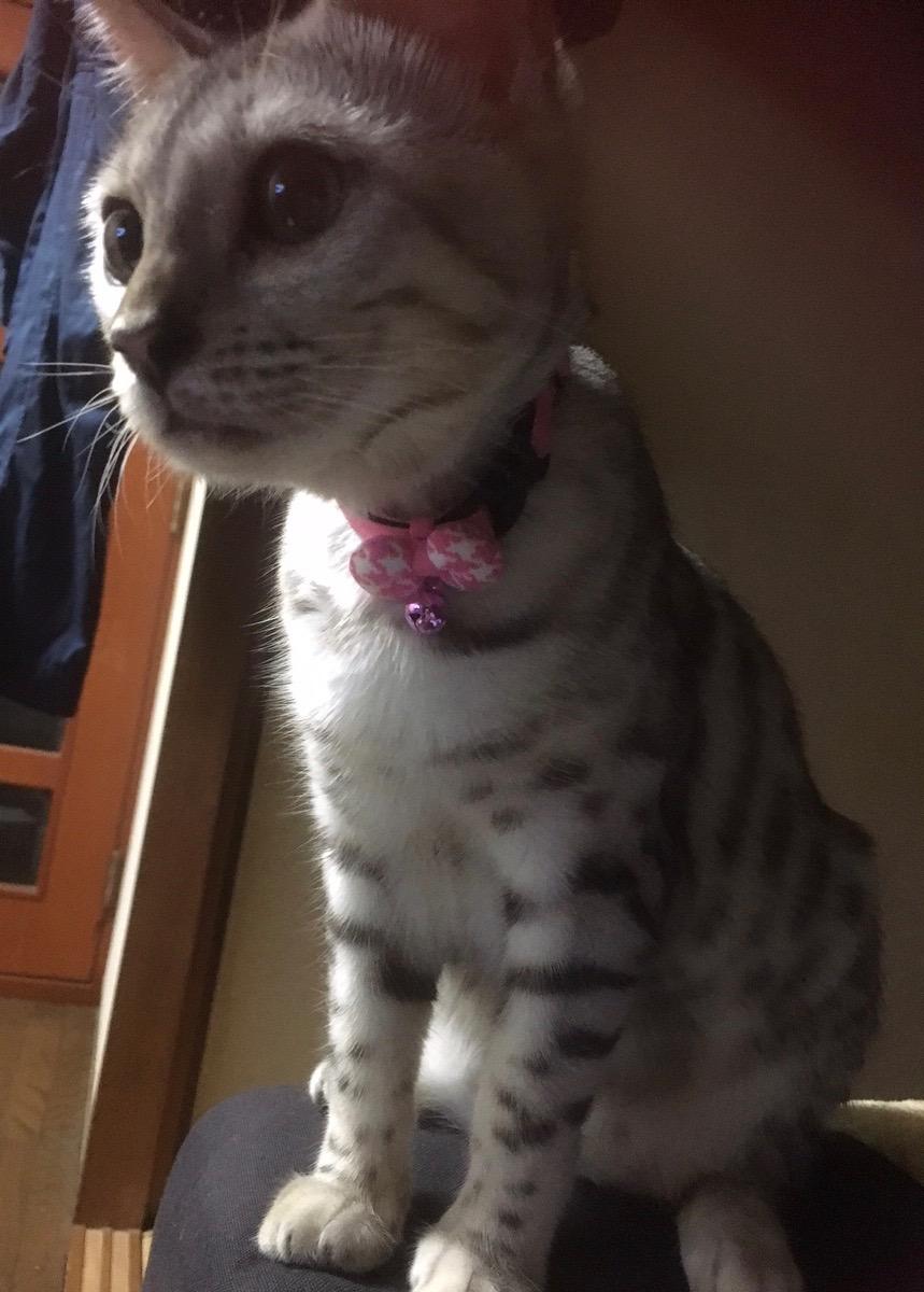 猫の首輪専門店mauha(寺田様)お写真2