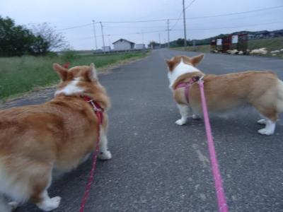 いざ、お残歩へ!