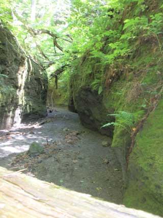 苔の生えた通廊