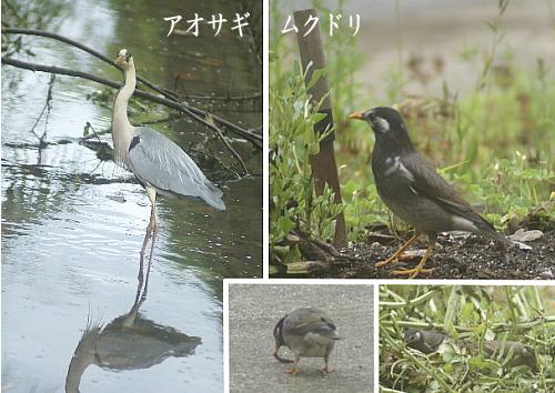0511-21野鳥