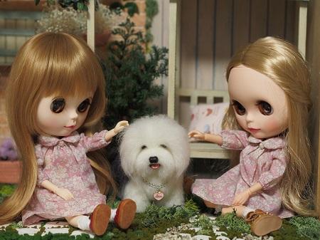 ブラ姉妹の大型犬1