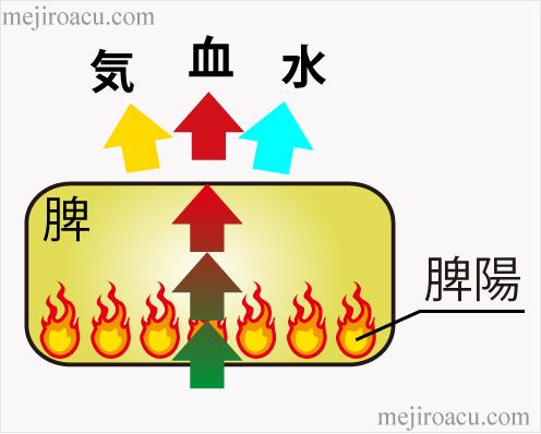 20160701脾陽の働き脾について1脾臓中医東洋医学脾