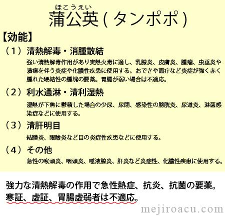 20110607ほこうえい・タンポポ中医学(蒲公英)効能、タンポポの性質、東洋医学、生薬タンポポ茶