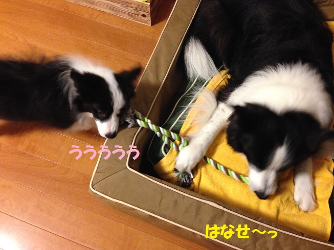 IMG_0116_20160916194611cc7.jpg