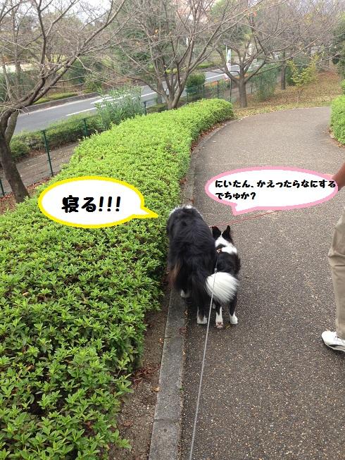 IMG_1145_201610112019271d3.jpg