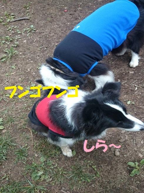 IMG_7946_201607262115403e8.jpg