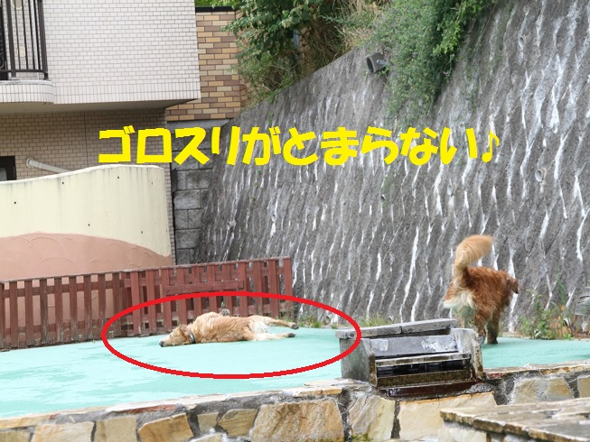 IMG_8685.jpg