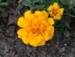 花16161
