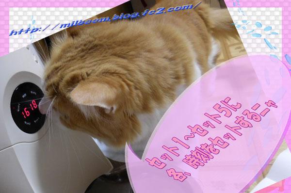 nekoaruki003.jpg