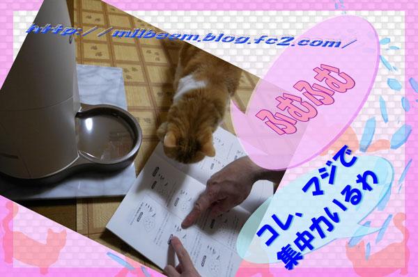 nekoaruki004.jpg