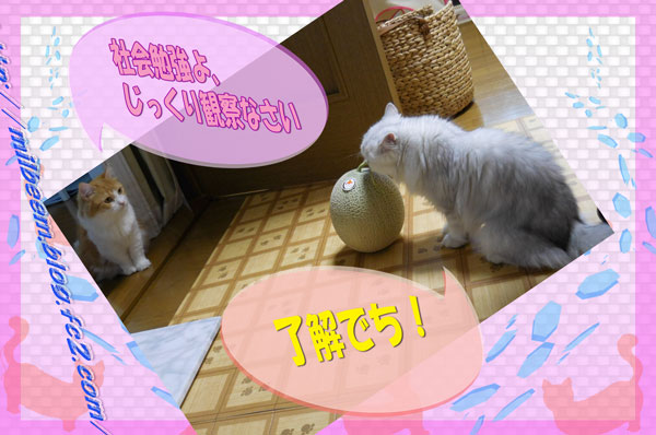 omotyabako003.jpg